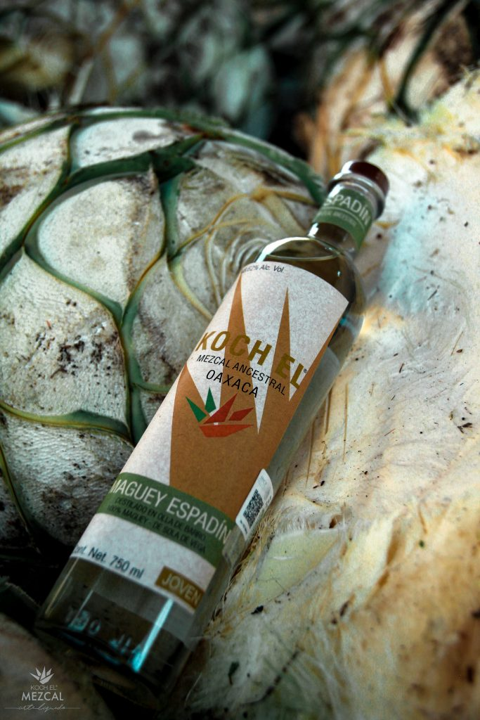 Carlos Moreno Koch Mezcal bottle on agave