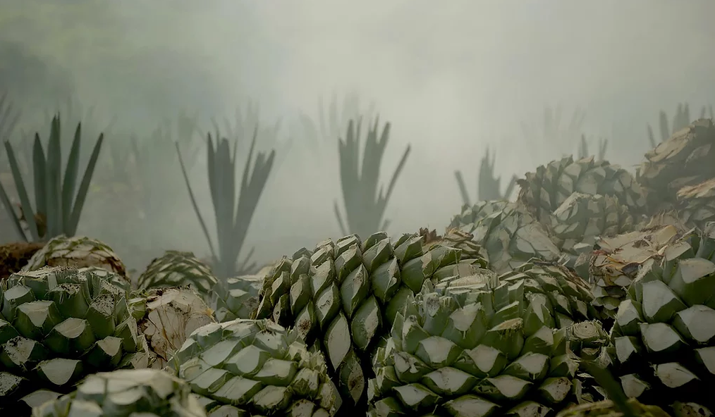 Montelobos agave