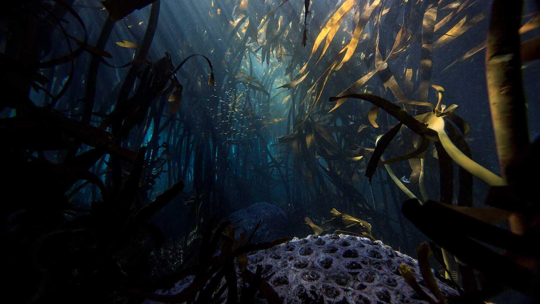 Talisker x Parley Rewild Our Seas