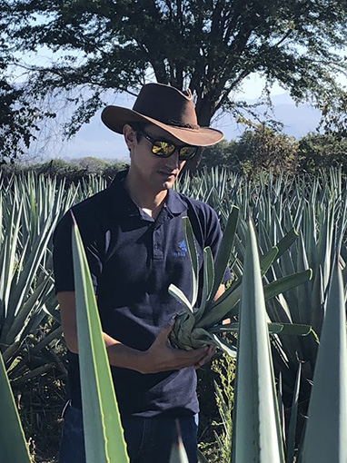 José Valdez agave