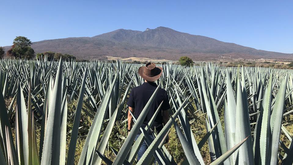 Jose Valdez in Partida Agave fields volcano Tequila