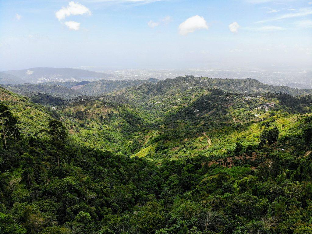 sugarcane blue mountains jamaica