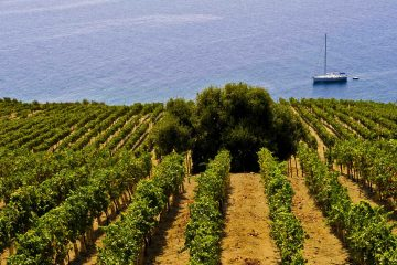 Wines of Sicily Colangelo