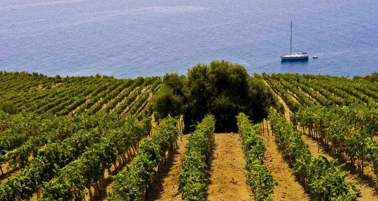Wines of Sicily Colangelo